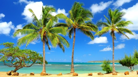 beaches-palm-trees-pictures